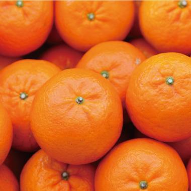 オレンジ果⽪油
